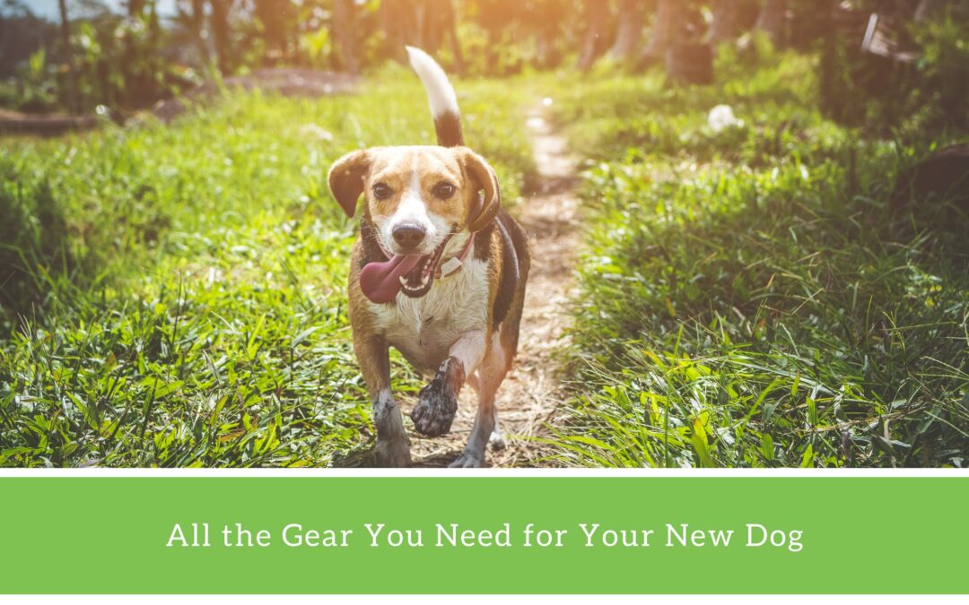 10 Things to Buy Before Adopting a Dog