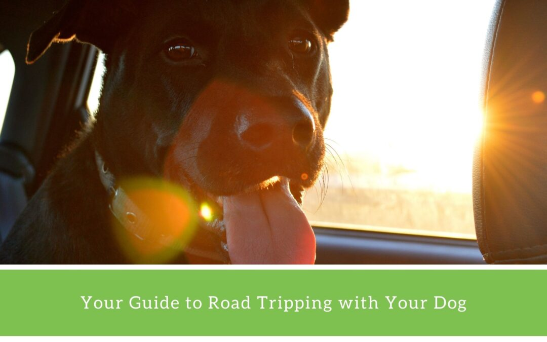 How to Take a Road Trip with Your Dog