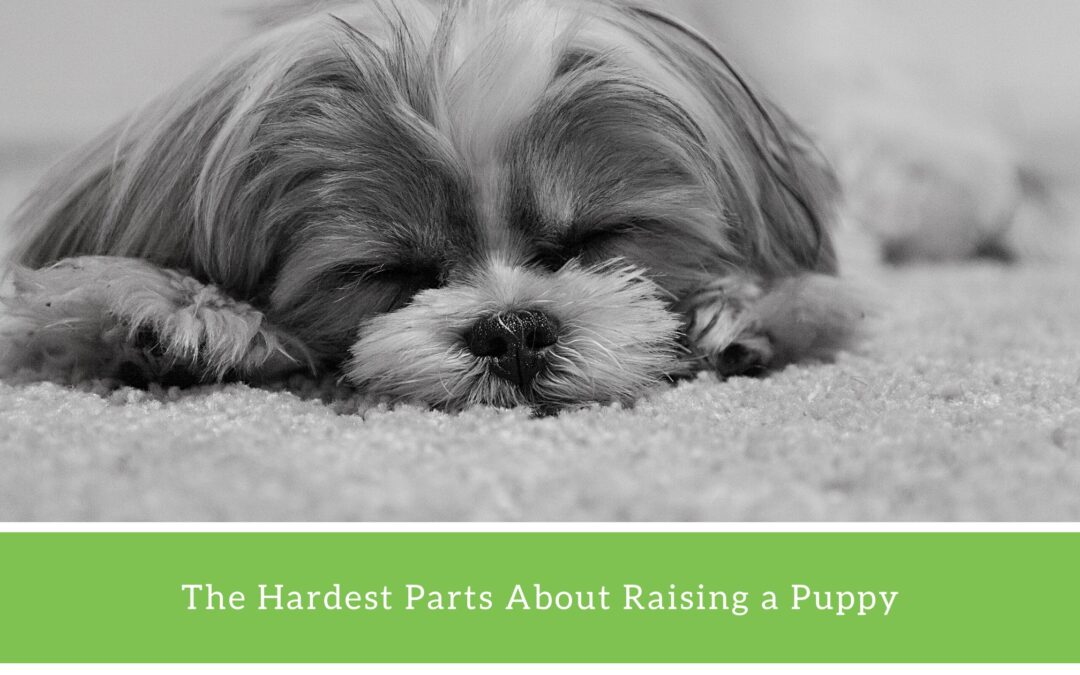 8 Things to Know Before Getting a Puppy