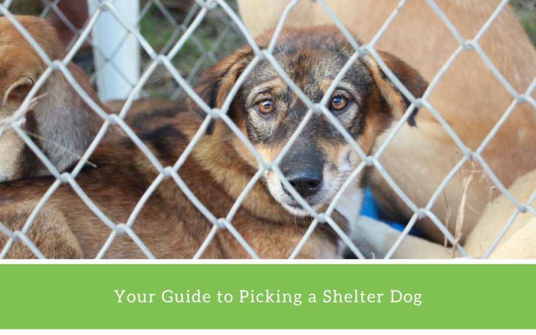 How to choose a rescue dog.